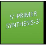 Primer Synthesis 25 nM 15-34bp